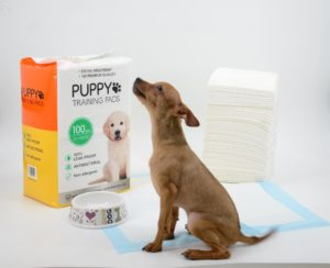 100 Pack Large Heavy Duty Puppy Pads 56x56cm Training Toilet Pads/Mats